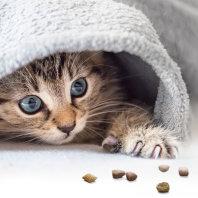 Mačji mladički