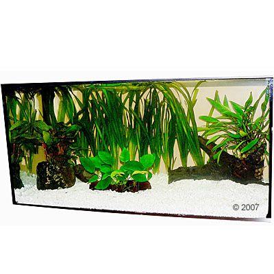 http://shop-cdn-m.shpp.ext.zooplus.io/bilder/aquariumplanten/zooplants/discusassortiment/2/400/50444_zooplants_diskuswerfer_2.jpg
