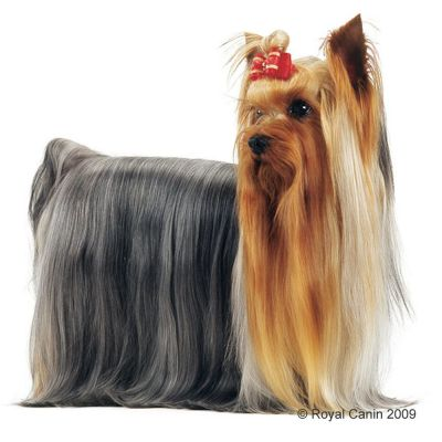 Royal Canin Yorkshire Terrier Adult Buy Now At Zooplus