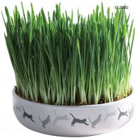 Ceramic Cat Grass Bowl + 50g Seed