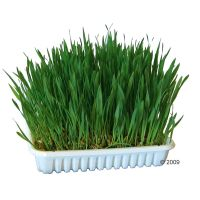 100g Nibble Grass for Small Pets