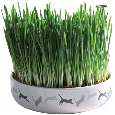 Trixie Ceramic Cat Grass Bowl + 50g Seed