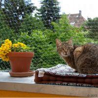 2 x 3 m transparent skyddsnät för katter