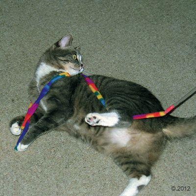 Cat Charmer macskajáték- 1 darab