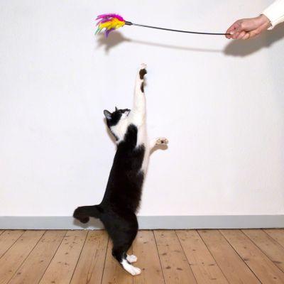 Tollsöprű - macskajáték