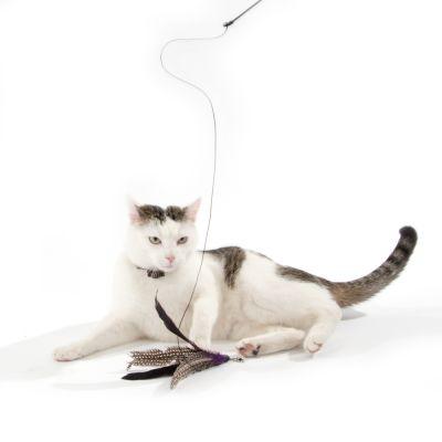 Cat Dangler Pole Bird