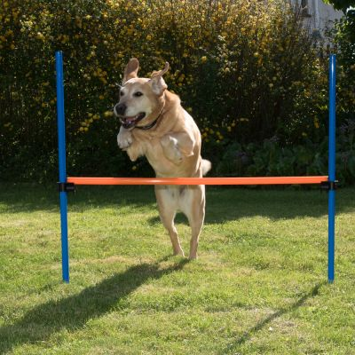 Agility Fun & Sport ugróakadály kutyáknak - Teljes szett
