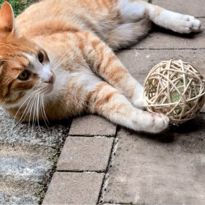 Aumüller Mini Valerian Rattan Ball Cat Toy