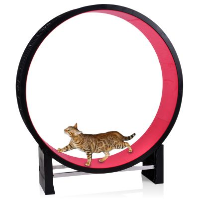 CanadianCat Company Cat in Motion Wheel