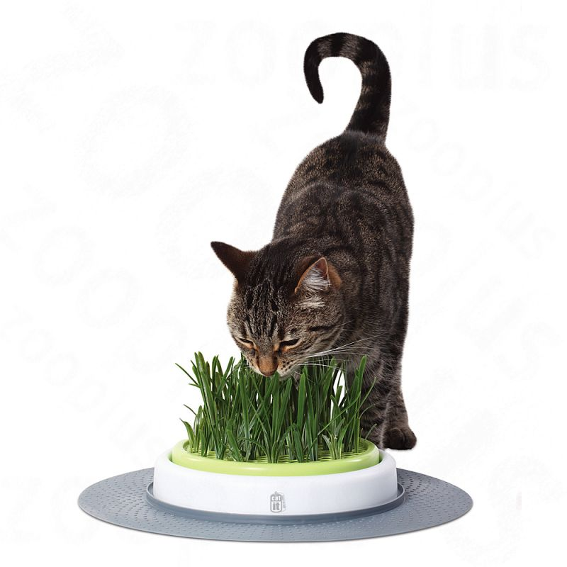 Catit Design Senses Grass Garden