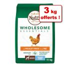 Croquettes Nutro Wholesome Essentials 8 kg + 3 kg offerts !