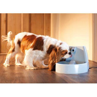Petsafe Pet Dog Cat Bowl Pond Aquarium Water Filter Filtration System 10-pack Reputation First Pet Supplies
