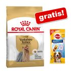 Duże opakowanie Royal Canin Breed + Pedigree DentaStix, 180 g gratis!