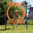 Fun & Sport Dog Agility Jumping Hoop