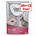 85g Concept for Life Wet Cat Food - 36 + 12 Free!*