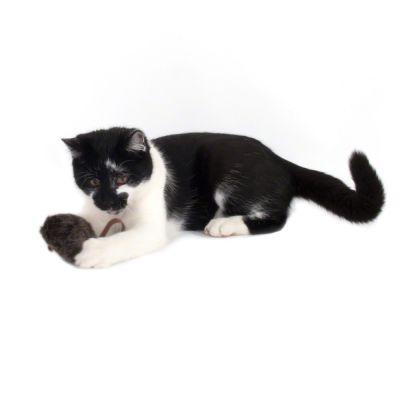 Gioco Per Gatti Topolino Sonoro Wild Mouse Con Led Zooplus