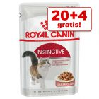 20 + 4 gratis! 24 x 85 g Royal Canin in Soße / Gelee