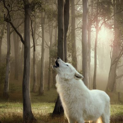 5 + 1 gratis! 6 x 300 g Wolf of Wilderness Adult