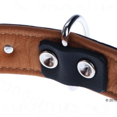 Heim Leather Lead & Collar Set - Stars