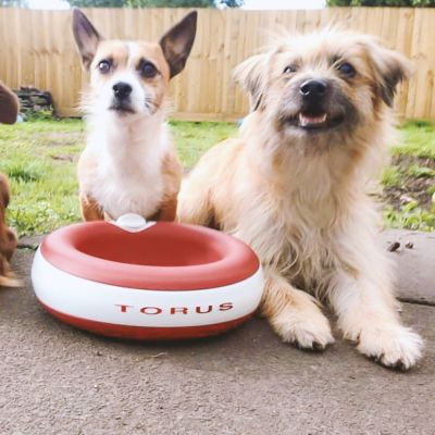 Heyrex Torus Pet Water Bowl - Red