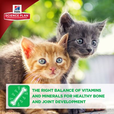 Hill's Science Plan Kitten Healthy Development with Tuna