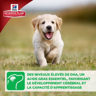 Hill's Science Plan Puppy Healthy Development agneau, riz pour chiot