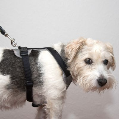Hunter Neoprene Harness – black/ grey