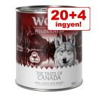 20 + 4 ingyen! 24 x 800 g Wolf of Wilderness