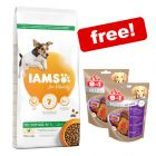 12kg IAMS Vitality Dry Dog Food + 2 x 8in1 Fillets Pro Active Treats Free!*