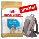 12 kg Royal Canin Breed + Zainetto gratis!