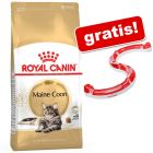 10 kg Royal Canin kattemad + Cat Play Circuit gratis!