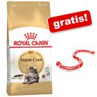 10 kg Royal Canin torrfoder + Cat Play Circuit på köpet!