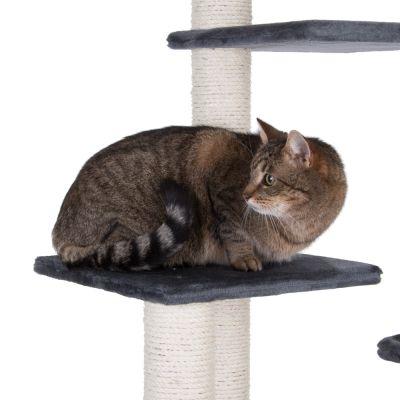 čierna mačička šírenie pic