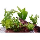 Lot de plantes pour aquarium de 60 cm