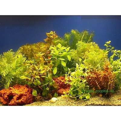 Lot de plantes colorées pour aquarium