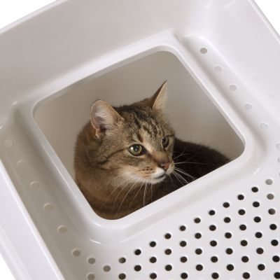 Maison de toilette Big Box pour chat