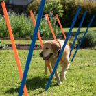 Outdoor Agility Fun & Sport - Slalom