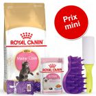 Pack malin Royal Canin Maine Coon pour chaton
