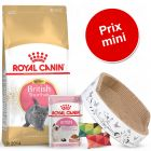 Pack malin Royal Canin British Shorthair pour chaton