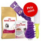 Pack malin Royal Canin Persian pour chaton