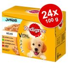 Pakiet Pedigree Junior Saszetki, 24 x 100 g
