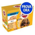 Provalo! Pedigree Senior 7+
