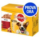 Provalo! Pedigree Vital Protection in Gelatina
