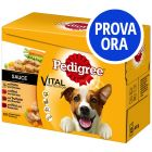 Provalo! Pedigree Vital Protection in Salsa