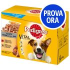 Provalo! Pedigree Vital Protection Patè Pollo & Manzo