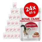 Royal Canin Jelly & Gravy Μεικτό Πακέτο 24 x 85 g