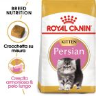 Royal Canin Persian Kitten