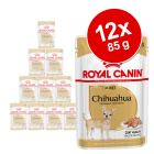 Royal Canin Breed Chihuahua w saszetkach