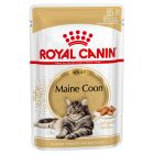 Royal Canin Breed, Maine Coon
