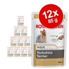 Royal Canin Breed Yorkshire Terrier w saszetkach